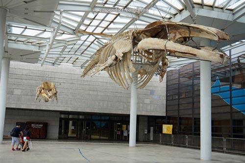 พิพิธภัณฑ์ธรรมชาติตอน1
