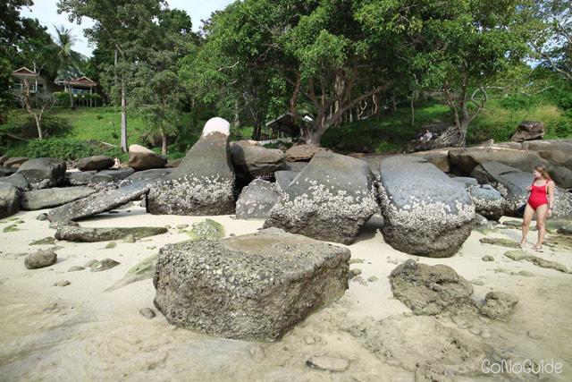 หอยนางรมเกาะโขดหิน