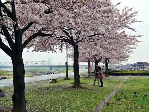เที่ยวโตเกียว-201