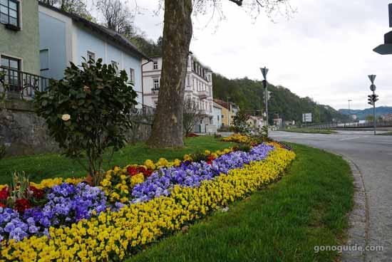 ดอกไม้ข้างทางเมือง Passau